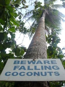 2025413-a-coconut-tree-1